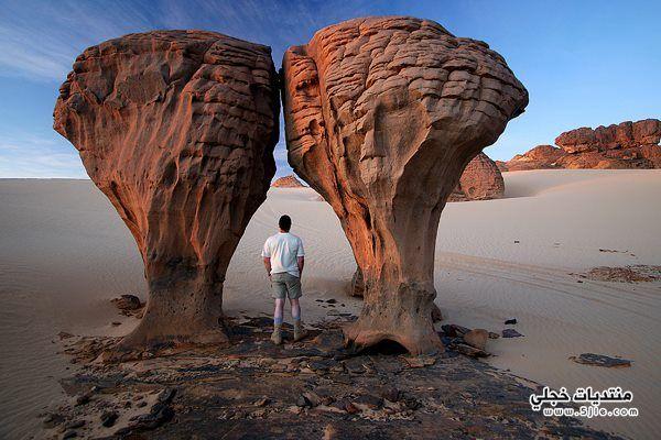 الجزائر 2014