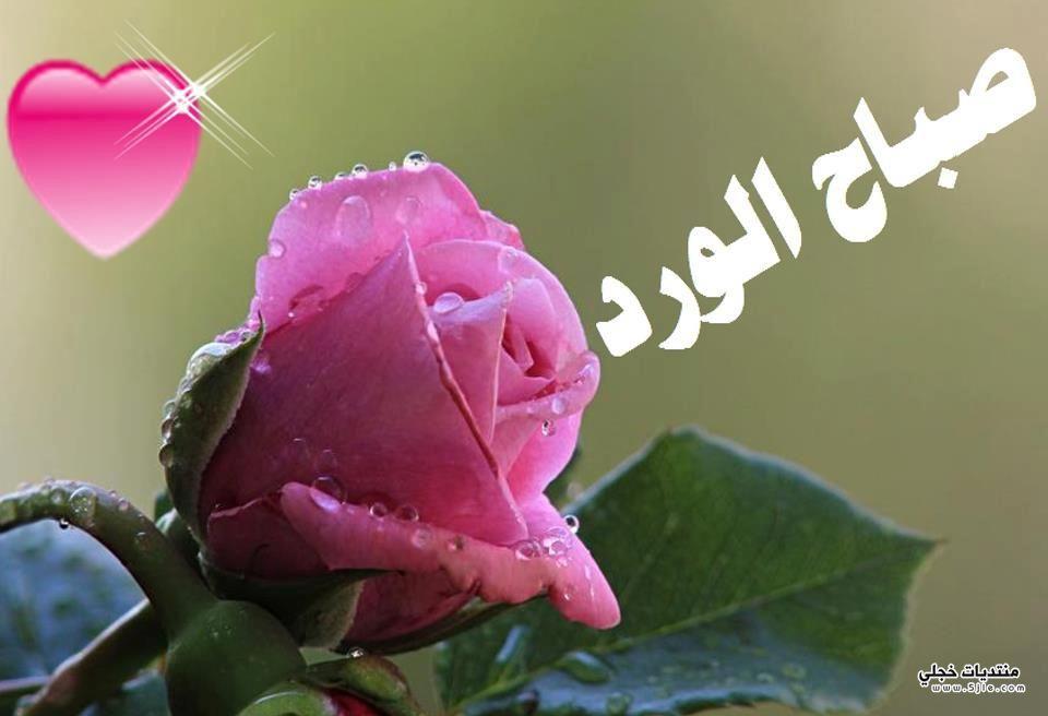 صباح الفل والياسمين 2014
