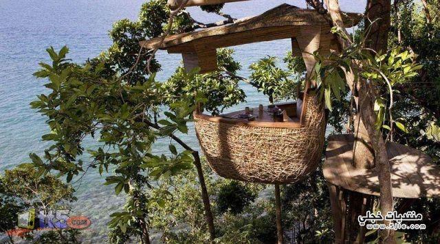 مطعم الشجرة 2014 مطعم ومنتجع