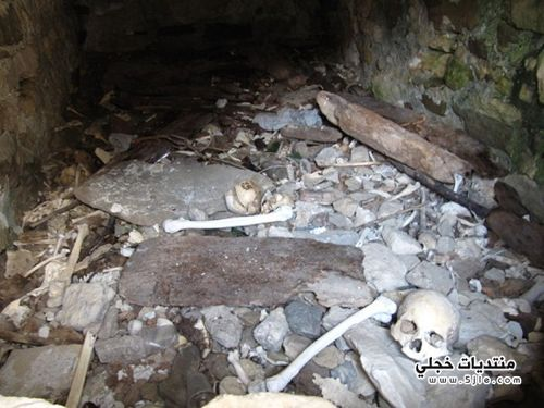 السياحة مدينة الموتى 2014 دارغافس