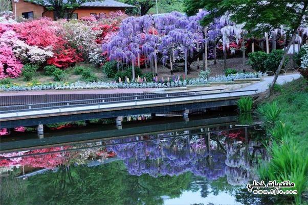 شلالات الورد اليابان 2014 رائعة