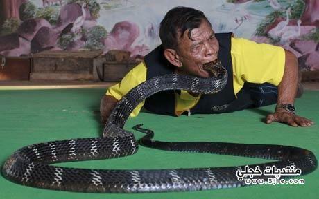 قرية الكوبرا يتعايش الإنسان الثعابين