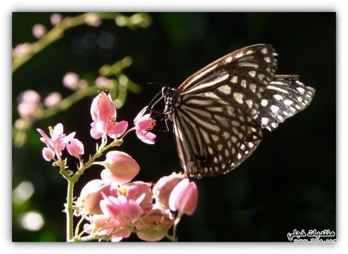 حديقة الفراشات كوالا 2014 لحديقة