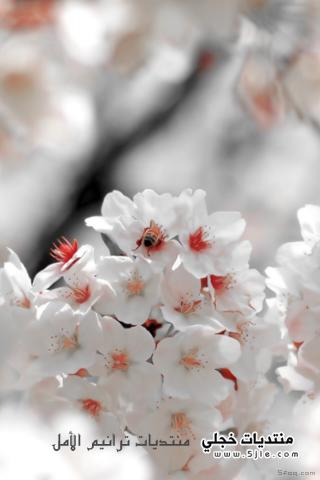 خلفيات ايفون زهور 2014