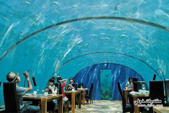 المالديف 2014 مطاعم المالديف 2014
