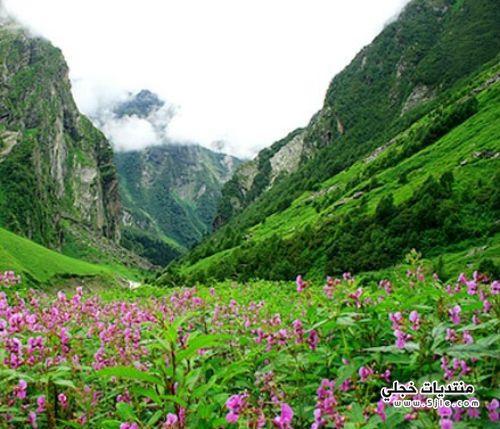 وادي الزهور بالهند وادي الزهور
