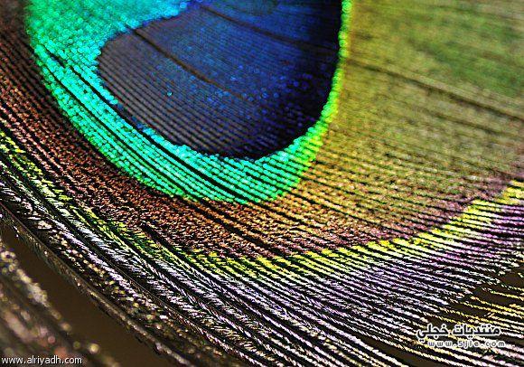 لجماعة القطيف للتصوير الضوئى ألوان