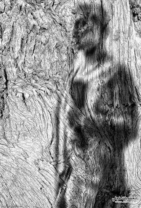 أروع وأجمل القصائد الضوئية 2012