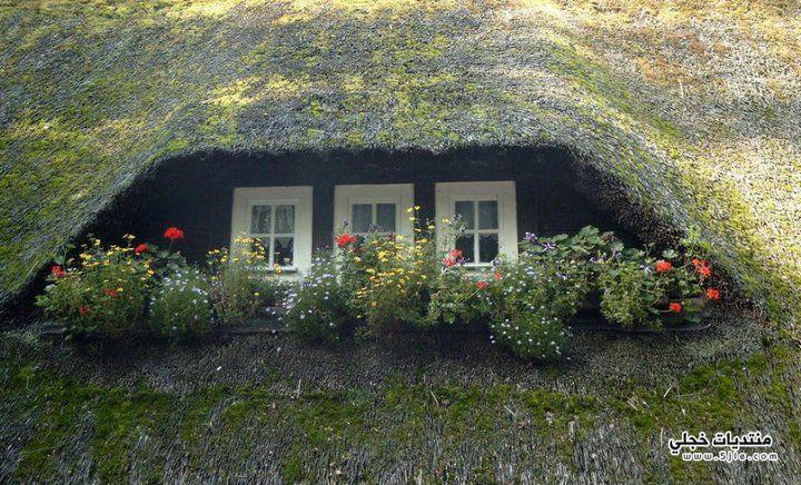 نوافذ منازل 2013 منازل 2013