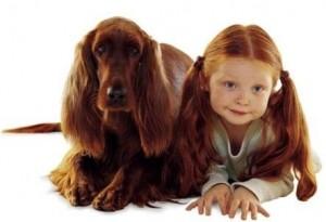 كلاب تشبه اصحابها كلاب تشبه