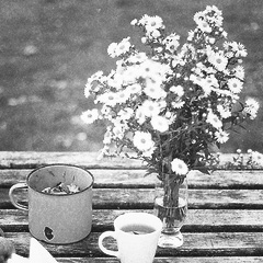 زهور مميزة 2014 زهور ابيض