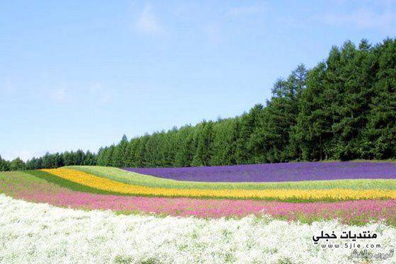 ���� ����� 2014 beauty earth
