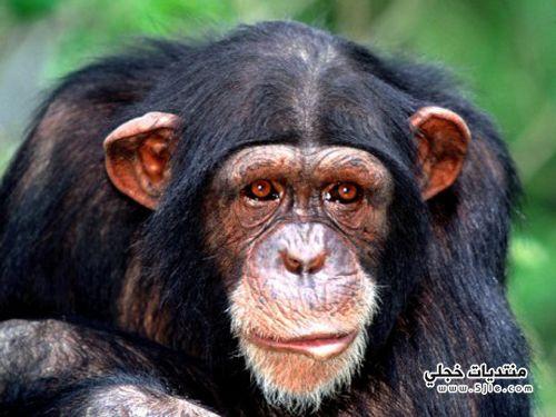 اذكى الحيوانات بالعالم 2013 اذكى