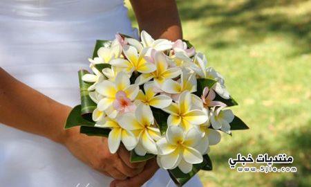 كولكشن منوع للعروسه منوعات للعروس