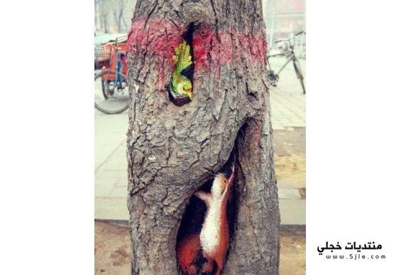 حقيقي الاشجار الاشجار الرسم الاشجار