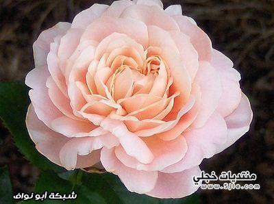 اغلى انواع الزهور العالم اغلى