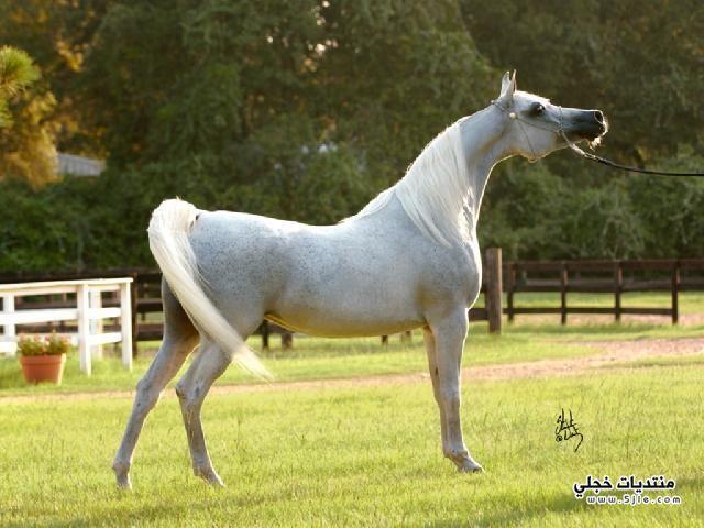 خيول اجمل الخيول خيول خيول