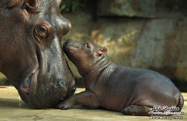 اطفال الحيوانات اطفال الحيوانات امهاتهم