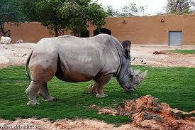 افضل حدائق حيوان العالم حدائق
