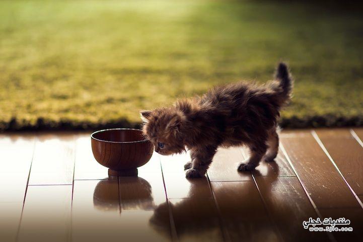 قطاوة اجمل كيوت جميلة حلوه
