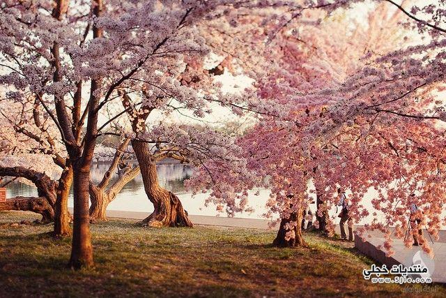 ورود الاشجار ورود الاشجار الورد