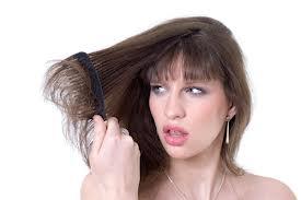 علاج تقصف اطراف الشعر 2013