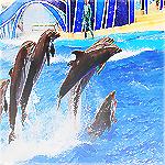 اروع ماسنجر اكلات 2013 دلافين