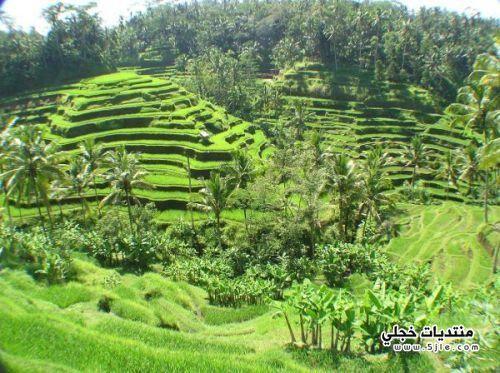 مدينة بنشك اندونيسيا 2013 السياحة