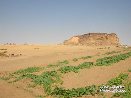 البركل السودان 2014 البركل السودان