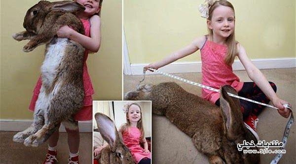 اكبر ارنب العالم اضخم ارنب