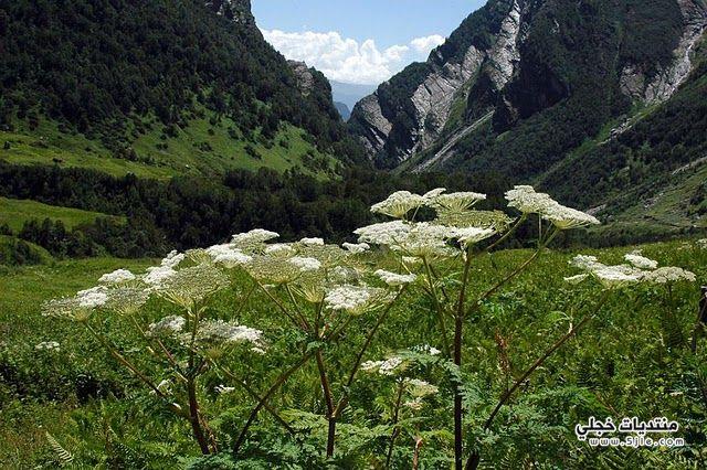 وادي الزهور الهندي 2014 معلومات