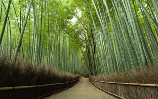 بستان الخيزران اليابان 2014 بستان