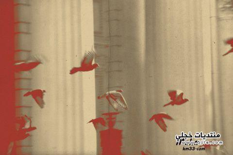 خلفيات عصافير بلاك بيري 2014