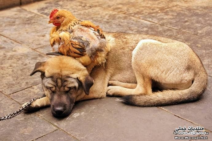 صداقات صداقات اجمل الصداقات صداقات