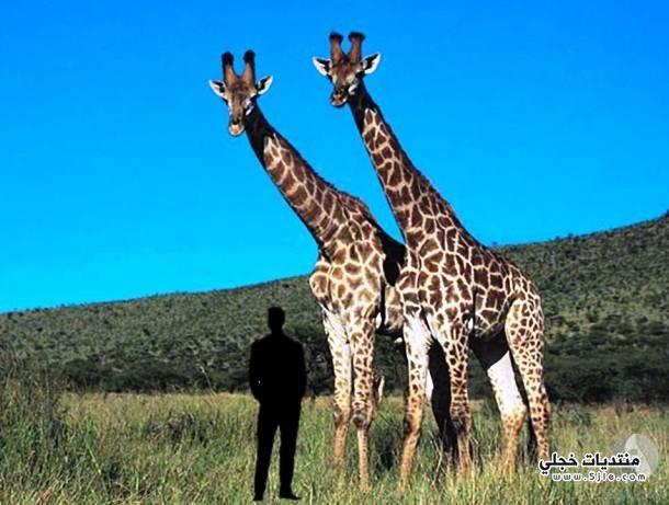 اضخم الحيوانات الارض اضخم الحيوانات