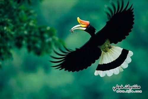 جمال جامع اميه بدمشق الجمال