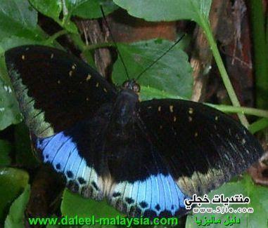 حديقة الفراشات ماليزيا 2014 حديقة