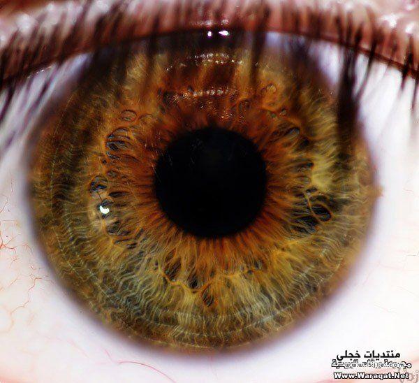 مجموعة عيون عيون مجموعة عيون