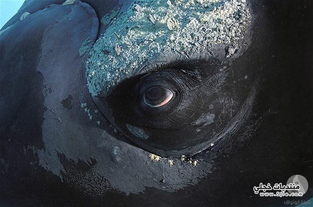 عيون الحيوانات عيون الحيوانات قريبة