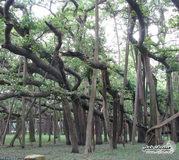 غابات غابات غابات استوائية اجمل