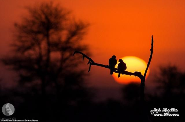 ظلال الحيوانات الحيوانات ظلال الحيوانات
