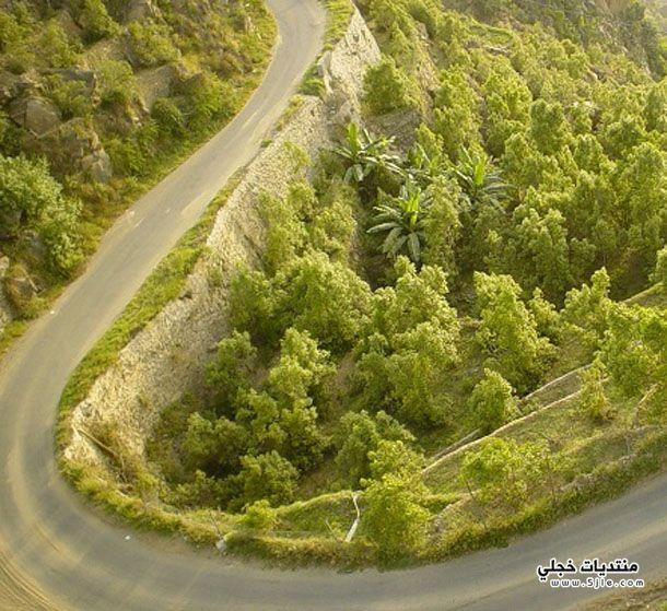 جبال فيفا معلومات جبال فيفا