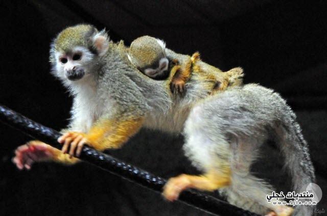 الحيوانات صغارها للحيوانات صغارهم حيوانات
