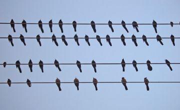 لماذا يصعق الطائر الكهرباء