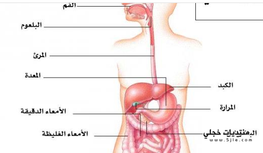 تعريف الجهاز الهضمي