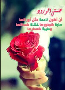 خاطرة الورد الاحمر