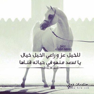 خيول مكتوب عليها عبارات