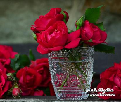 اشعار الورد