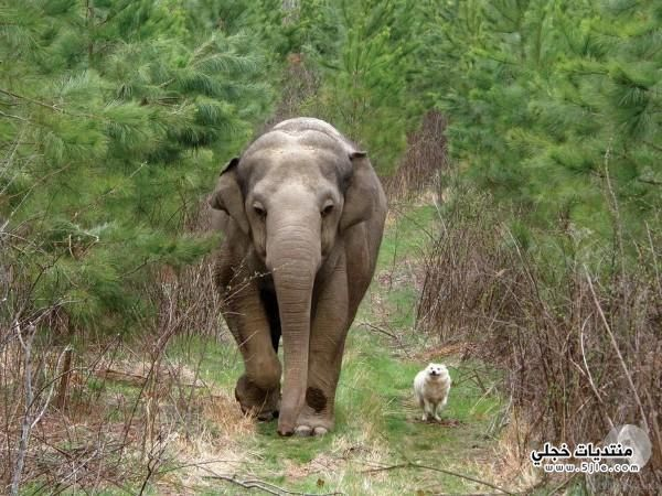 عالم الحيوانات عالم الحيوانات اجمل
