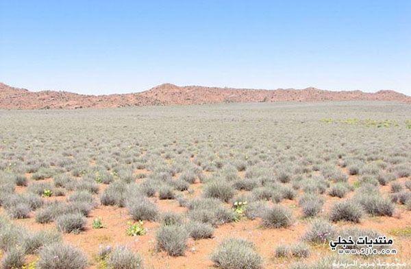 زهور صحراء ناماكولاند ناميبيا زهور
